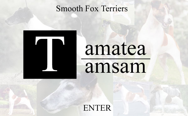 WELCOME TO TAMSAM & TAMATEA FOX TERRIERS